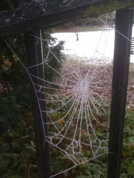 frostweb